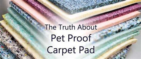 carpet cleaning tips carters carpet blog