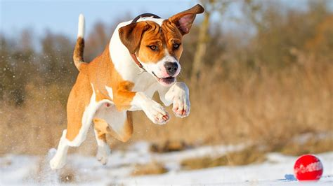 dog backgrounds   amazing wallpapers