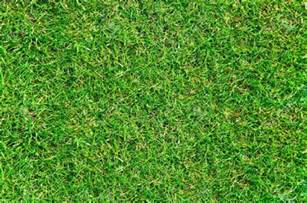 Premium Lawn And Landscape by 18 Grass Textures Psd Png Vector Eps Design Trends