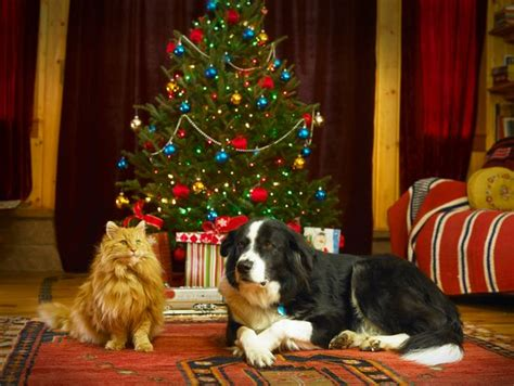 how to keep your pets safe this christmas as vets warn of
