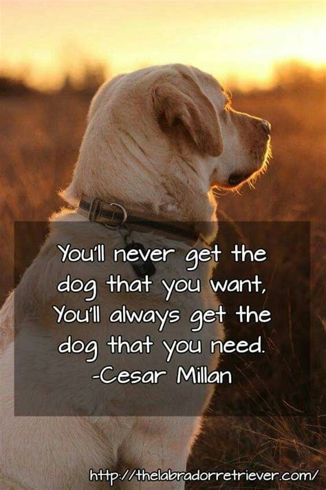 quotes  dogs ideas  pinterest puppy