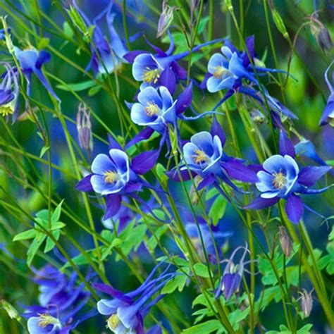 Blue Garden Flowers Blue Flowers By Garden Gnome On Blue Garden Flower