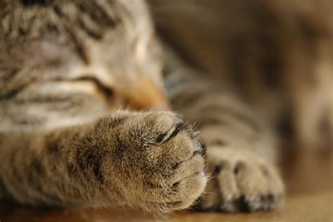Free photo: Cat, Paw, Pet, Cat'S Paw, Paw Print   Free