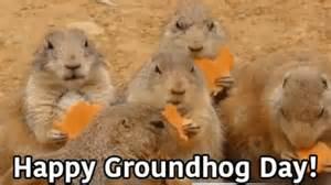 groundhog day reddit happy groundhog day gif groundhogday happy