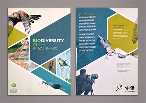 brochure layout sles ideas 35 beautiful modern brochure folder design ideas 2014