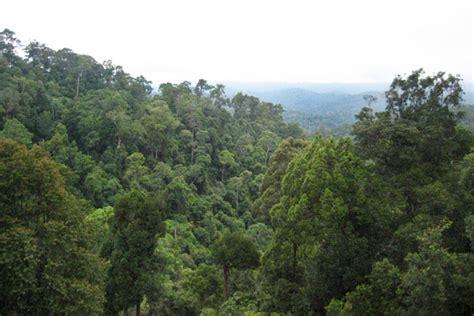 Potensi Dan Rencana Pengelolaan Hutan Kota Sangatta kutai timur mongabay co id