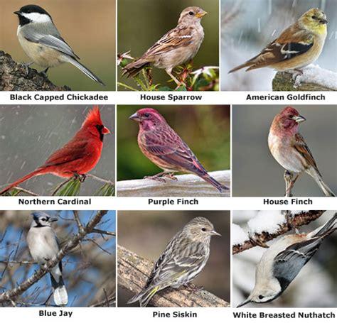 feeding minnesota birds in winter wescapes