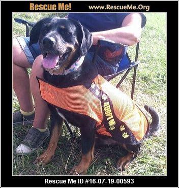 rottweiler rescue mn minnesota rottweiler rescue adoptions rescueme org