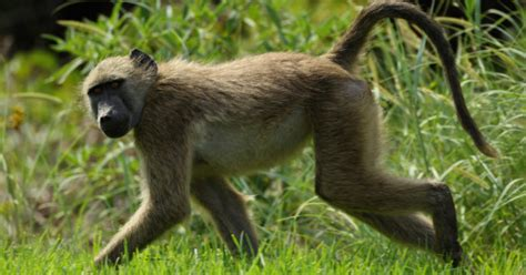 imagenes de animales de mexico imagenes de animales silvestres y salvajes imagui