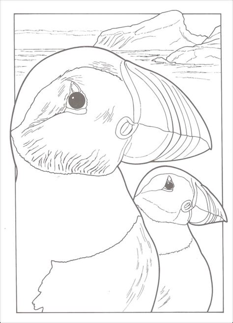 creative birds dot to dot coloring books birds creative coloring book 060858