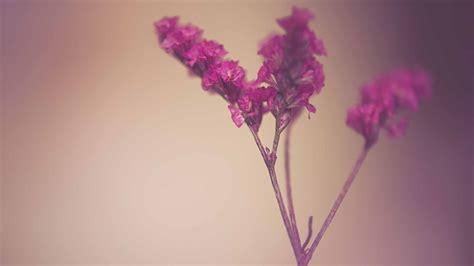 cute flowers mac wallpaper  allmacwallpaper