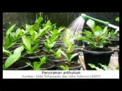 Erecto Biozon Food Plants Pupuk 17 best images about h i d r o p o n i k on plants raising and hydroponic systems