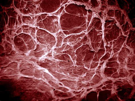 vein pattern photoshop evil texture by darknight stock on deviantart