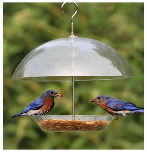kingfisher clear covered dome bird seed feeder for small