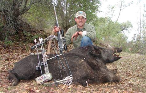 how to a to hunt hogs hog hunts oklahoma guides duck goose hog more