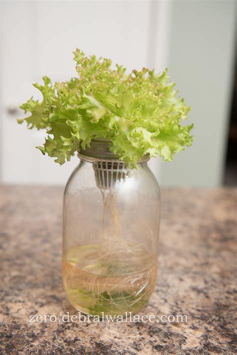 hydroponic gardening  mason jars  kratkey method