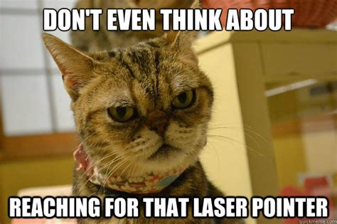 Laser Pointer Meme - that other angry cat died good angry cat quickmeme