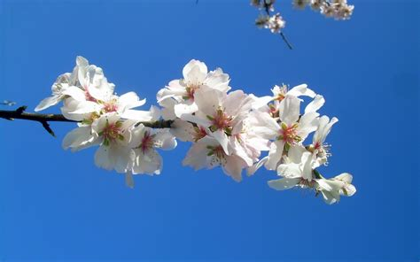 5 di fiori fiori rosa fiori di marzo 5 fiori invernali della