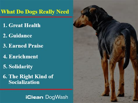 what do puppies need what do dogs really need iclean wash