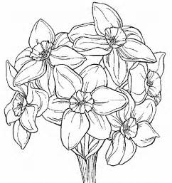 coloring pages daffodil flowers more daffodil coloring pages