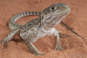 how do i choose the best pet lizard with pictures