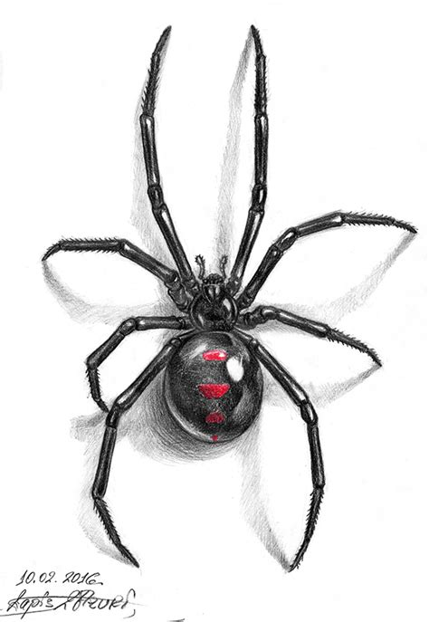 black widow tattoo design black widow by lapis lazuri on deviantart