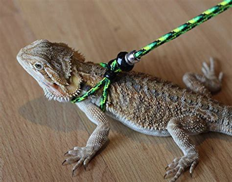 Tortle Adjustable Animal Size S 1000 images about bearded dragons on bearded