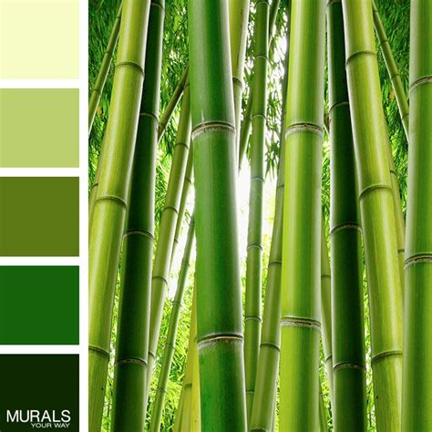 bamboo color bamboo serenity wall mural with color palette color