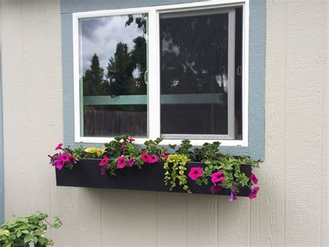 window box step by step guide to planting a window box