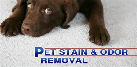 pet odor removal service ace carpet cleaning  anderson sc