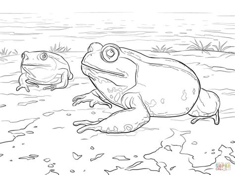 pacman frog coloring page 1000 images about frogs on pinterest madagascar