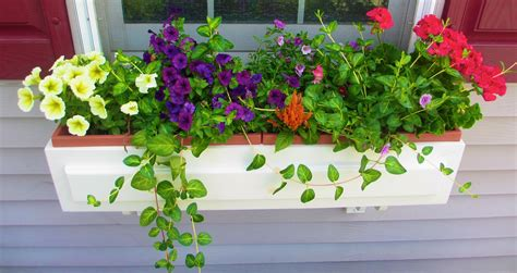 Garden Flower Boxes Grace S Glorious Garden Window Box Contest