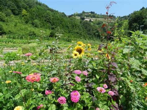 giardino botanico bergamo valle della biodiversit 224 sezione di astino foto di