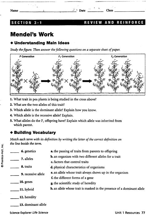 worksheet works answers mendelian genetics worksheet picture and images