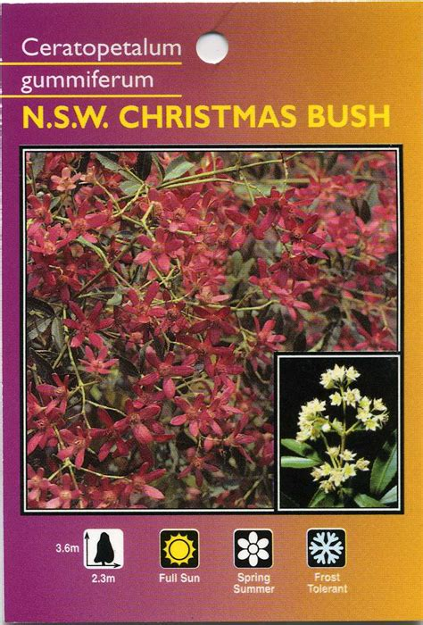 nsw christmas bush ceratopetalum gummiferum