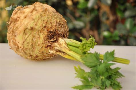 rapa di sedano ingrediente sedano rapa le ricette dello spicchio d aglio