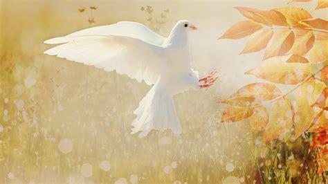 doves hd wallpaper 557370 jpg 100 wallpaper autumn chromebook collection best wallpaper hd