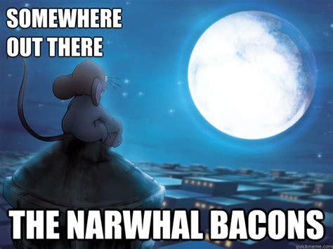 Narwhal Meme - elf narwhal memes