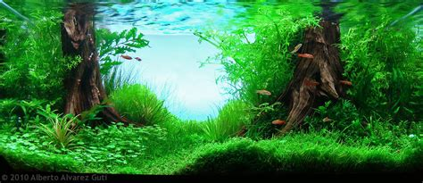 aquascape ideas tropical manage your freshwater aquarium tropical fishes and