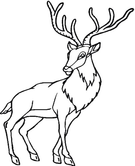 free coloring pages woodland animals free coloring pages of woodland creatures