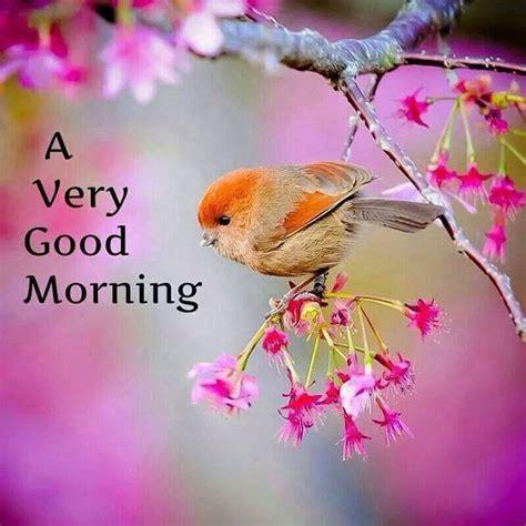 imagenes de mujeres good morning ਗ ਡ ਮ ਰਨ ਗ videos shayaris quotes sharechat