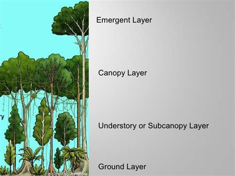 Canopy Biology Definition Tropical Rainforests Power Pt