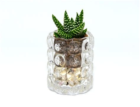 Succulents In Glass Vases by Succulent In A Clear Glass Vase