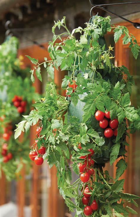 Tomato Hanging Planter by Hanging Tomato Planters Gardman Ethical Superstore