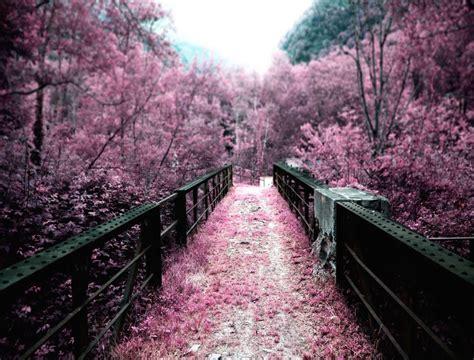 imagenes paisajes japoneses hd el hermoso espect 225 culo de los cerezos en flor en jap 243 n