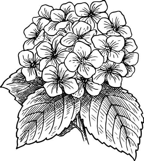 doodle drawings of flowers best 25 flower drawings ideas on flower