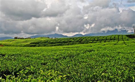 Harga Dispenser Sanken Utopia Hwd 760 harga jual teh kayu aro indahnya liburan ke perkebunan
