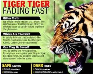 Essay On Tigers In India sateesh narasimhaiah save tiger