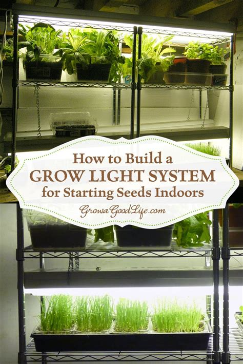 best light for seedlings 25 best ideas about grow lights on plant grow