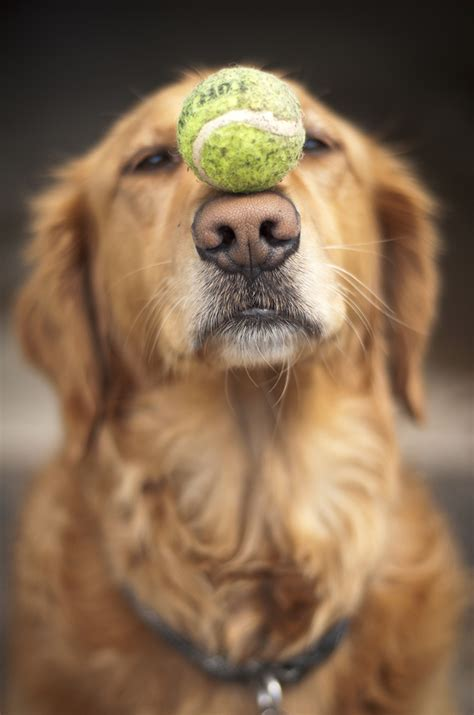 how to your to fetch a how to teach your to fetch fetch pet care